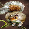 Acrobat squirrel puzzle
